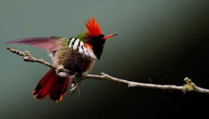 Яркие пигменты птичьих перьев могут рассказать о ходе эволюци и