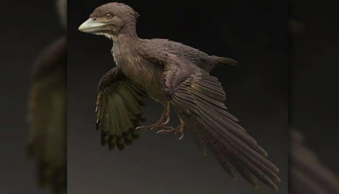 Найдены останки первой птицы на Земле