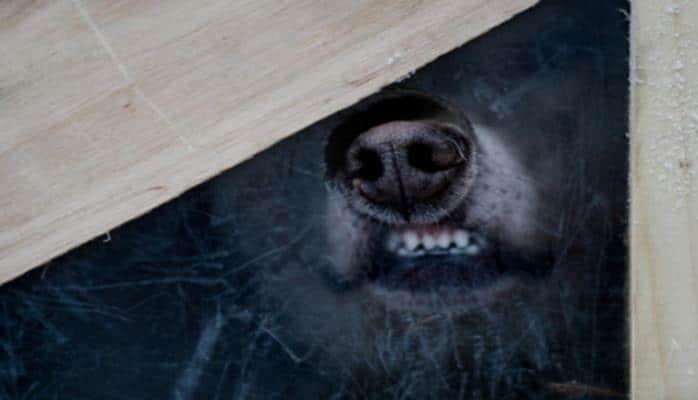 Назван способ защититься от агрессивной собаки