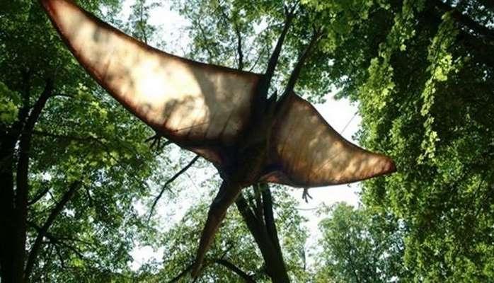 200 milyon yaşı olan uçan dinozavr növü kəşf edildi - Qanadları 12 metrdir