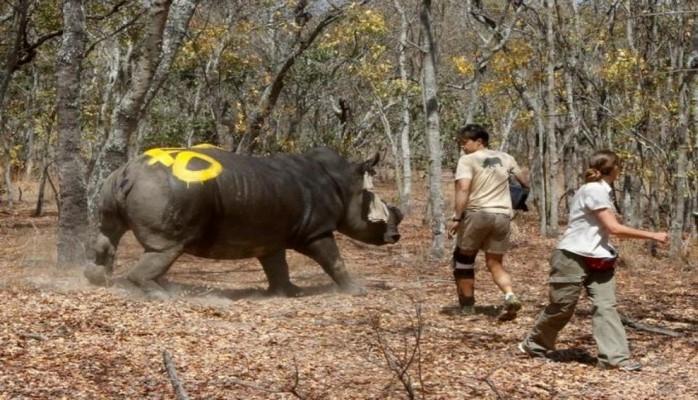 Испания стала первой страной ЕС, принявшей план по борьбе с нелегальным трафиком диких животных
