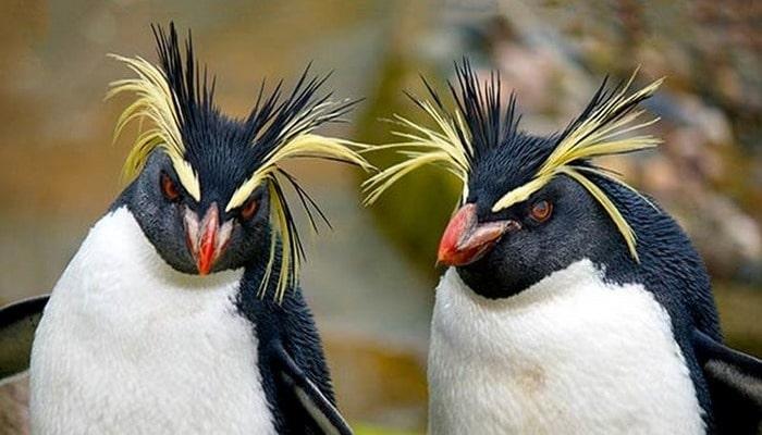 Пингвины умеют общаться даже на большой глубине