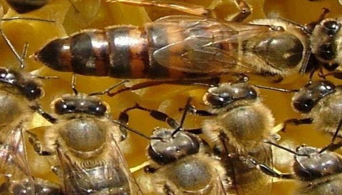 «Пчёлы начали массово исчезать»: Учёные пояснили причины