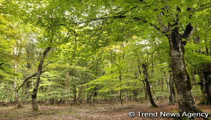 В России создадут шесть новых лесосеменных центров