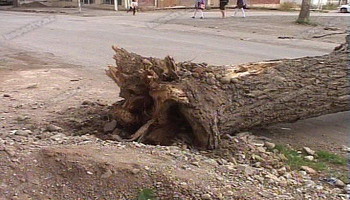 Bu dəfə 60 ağac aşdı, arasında qiymətli ağaclar da var...