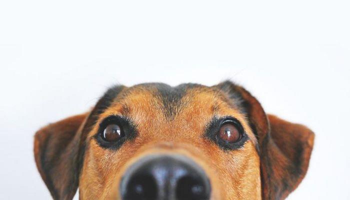 Топ-5 умных пород собак.