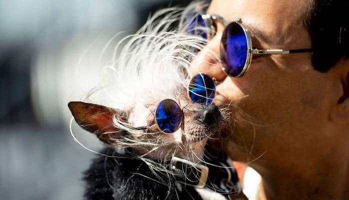 Исследование: наличие в доме собаки снижает риск смерти хозяина