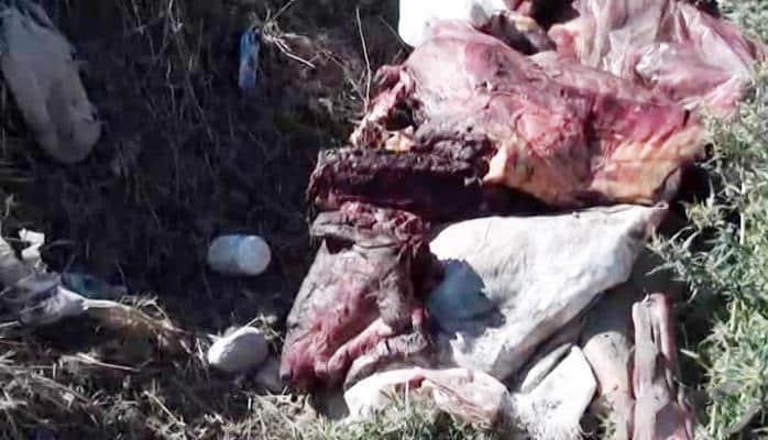Ukraynadan Azərbaycana külli miqdarda at əti idxalının qarşısı alınıb