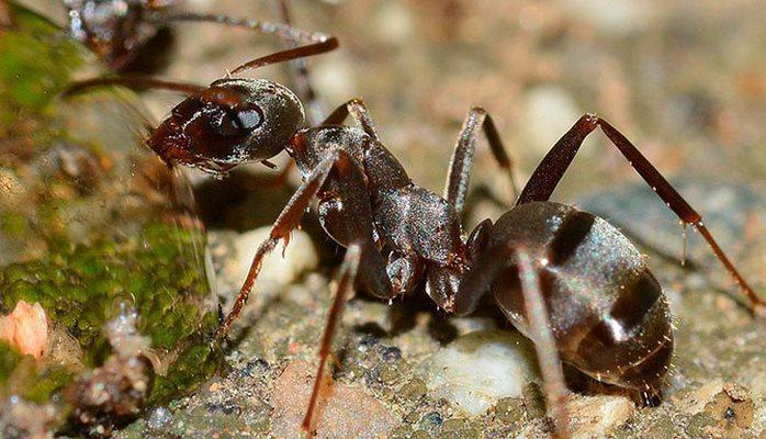 Ученые выяснили, как муравьи влияют на изменение климата