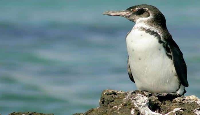 На Марсе нашли «пингвина»