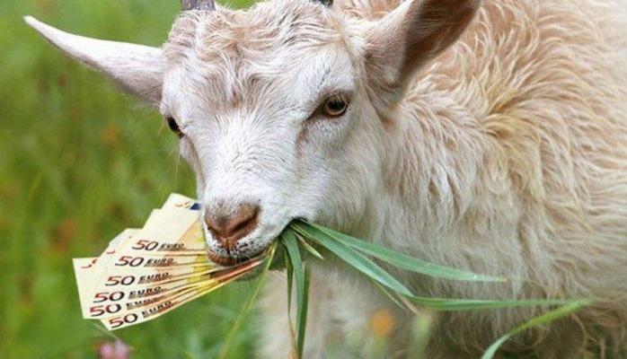Ev almaq üçün yığdığı 20 mini keçi yedi