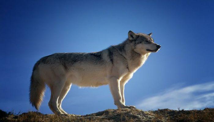 Ученые восстановили облик древней собаки