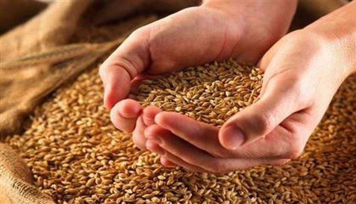 Азербайджан лидирует в списке импортеров зерна из Ставрополья и КЧР