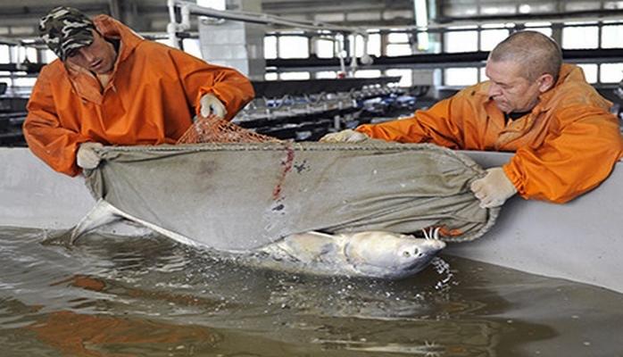 Израильская компания планирует построить под Пензой комплекс по выращиванию лосося