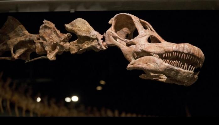 Yerdə ən böyük dinozavrın ölçüsü nə qədər olub?