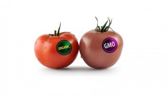 Geni modifikasiya olunmuş məhsullar vitaminsiz olur və ağız dadı vermir