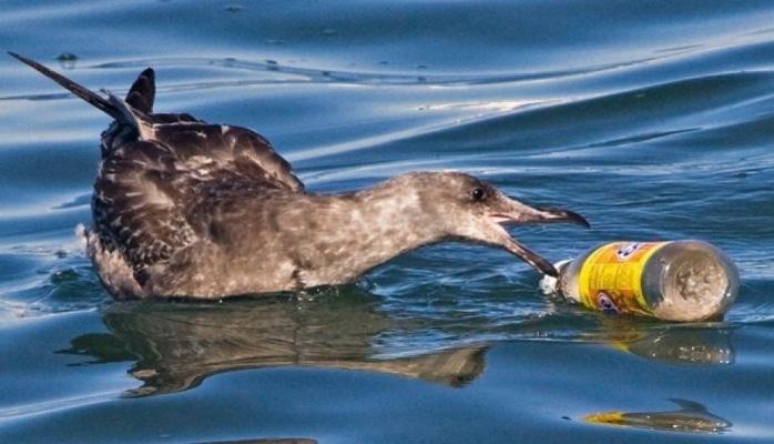 Пластик – смертельная угроза для перелетных птиц