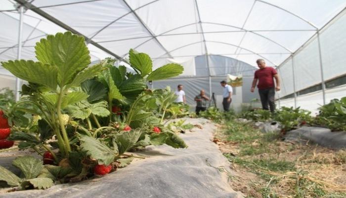 Öğretmenler serada sebze meyve üretiyor