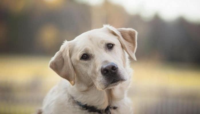 Ученые: Наличие собаки продлевает жизнь