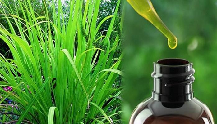 Palmarosa yağının faydaları nelerdir? Mutluluk hormonu salgılıyor! Mucize bitki palmarosa ne işe yarıyor?
