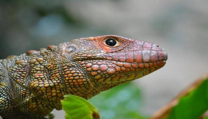 Ученые составили список самых странных рептилий в мире