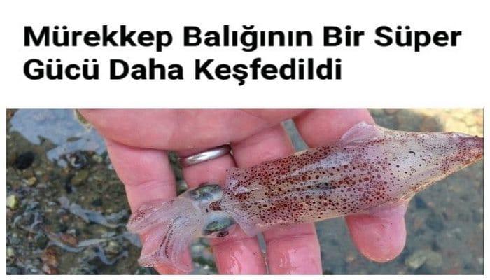 Mürekkep Balığının Bir Süper Gücü Daha Keşfedildi