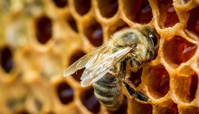 Что будет с планетой без пчел