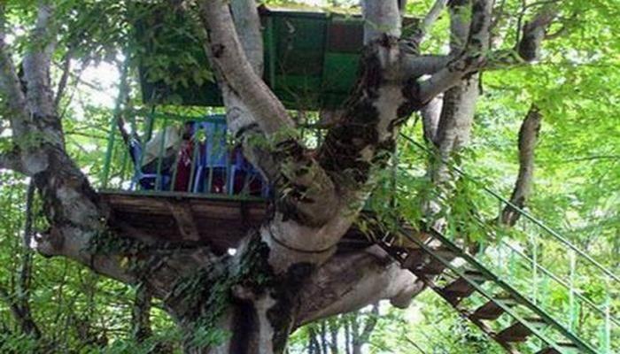 Azərbaycanda bu çayxana ağacın başında yerləşir