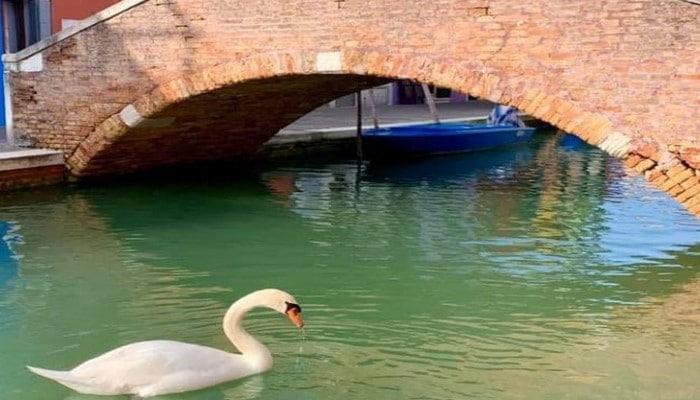 Venesiyada kanallarda su koronavirus səbəbiylə təmizlənib