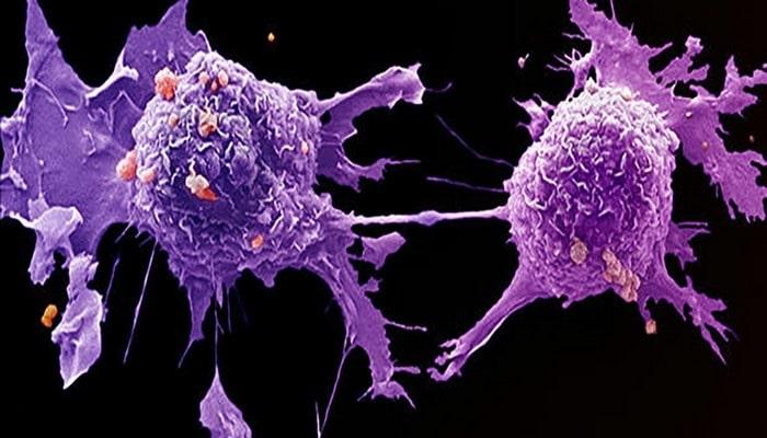 Ученые нашли новый источник разнообразия раковых клеток