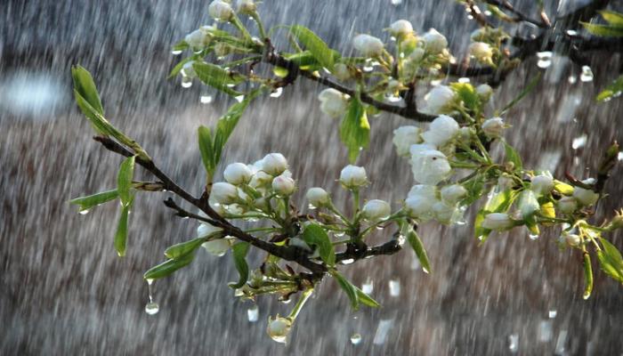 Bəzi rayonlara yağış yağıb, şimal-qərb küləyi güclənib