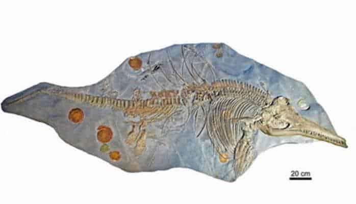 """Dinozavrlarla eyni dövrdə yaşamış """"balıq-kərtənkələ"""" skeleti aşkarlandı"""