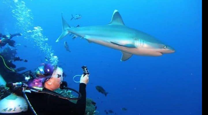 Женщина голыми руками отбилась от акулы