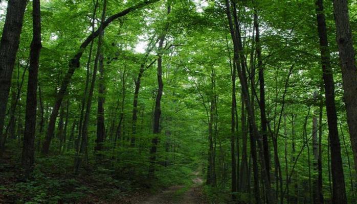 В лесной полосе пяти районов Азербайджана установлены камеры
