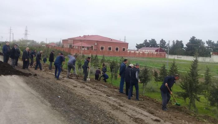 В Азербайджане посадили около 25 тыс. деревьев по случаю рождения 10-миллионного жителя