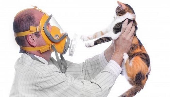 Ученые нашли способ снижения уровня аллергена кошек