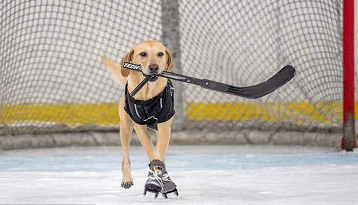 Спасенная собака научилась кататься на коньках