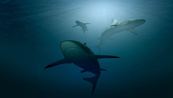 В Испании сняли акулу, которая плавала рядом с человеком. Посмотрите, как это было