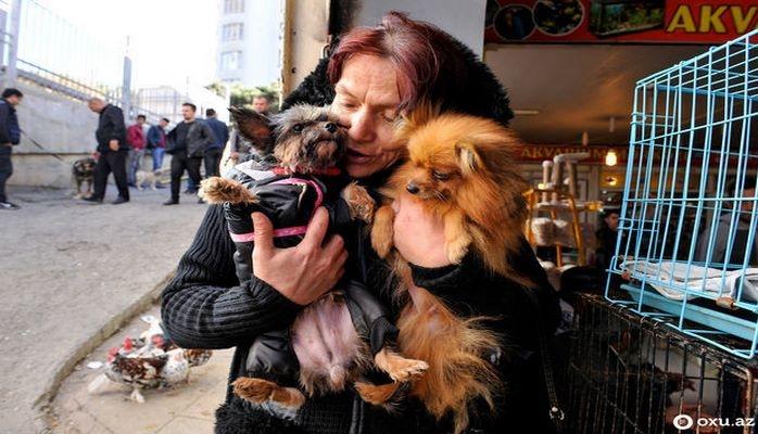 Яркий рынок животных в Баку