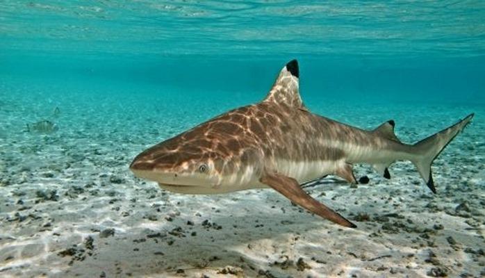 Акулы остаются загадкой: Микробиомы их кожи не позволяют развитие инфекций