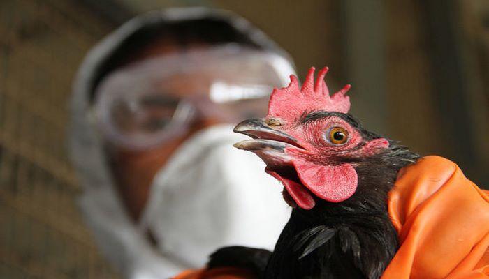 В Азербайджане наложен запрет на импорт птицы из России