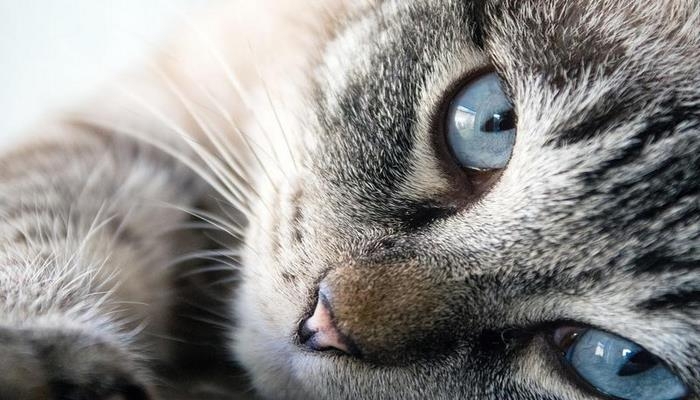 Швейцарские специалисты предложили неожиданную стратегию борьбы с аллергией на кошек