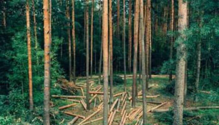 Norveç meşələri qırmaqdan imtina edən ilk ölkədir
