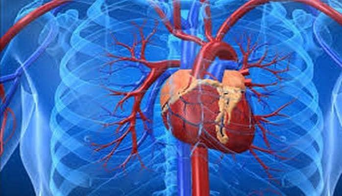 Сибирские ученые вырастили искусственные клетки сердца для изучения опасного заболевания