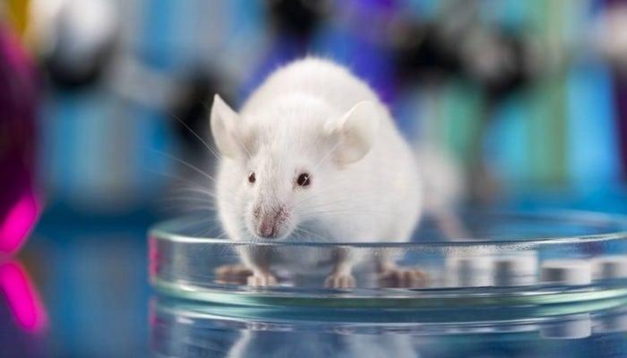 Наночастицы успешно вылечили рак кишечника