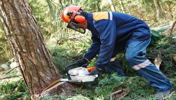 В Азербайджане компания оштрафована на 50 тыс. манатов за вырубку деревьев