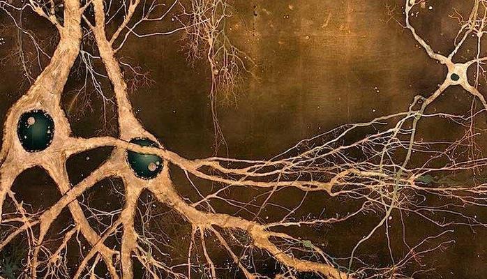 Ученые: нервные клетки все-таки восстанавливаются