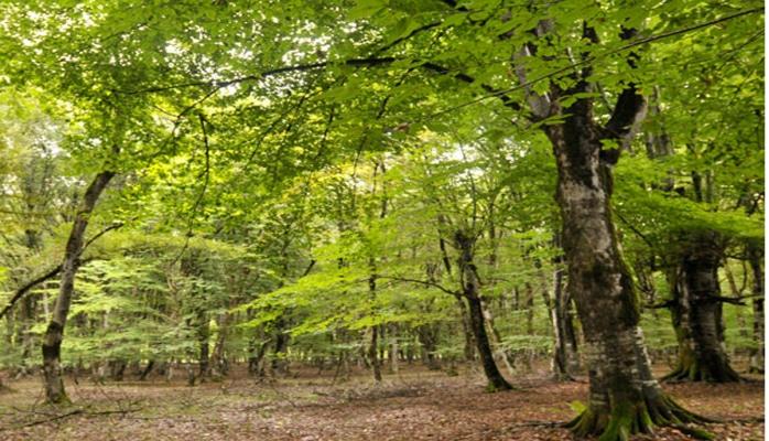 В Азербайджане введены новые требования в сфере лесного хозяйства