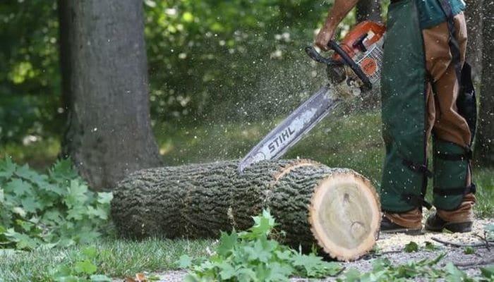 В Баку срубят 5 тысяч деревьев