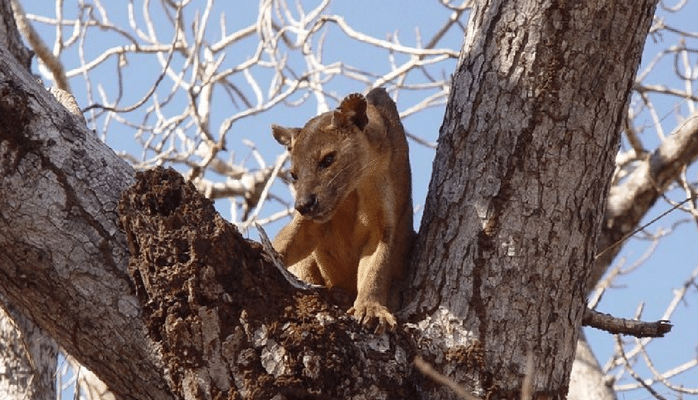 Учёные уточнили число вымирающих видов животных